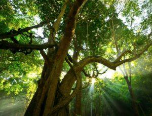 Haven Tree – A Poem by Julie Clark