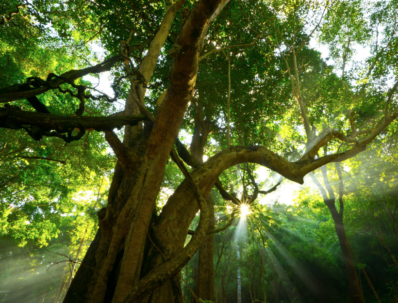 Haven Tree – A Poem by Julie Clark