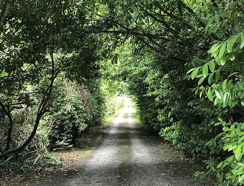 Durrow Pathway