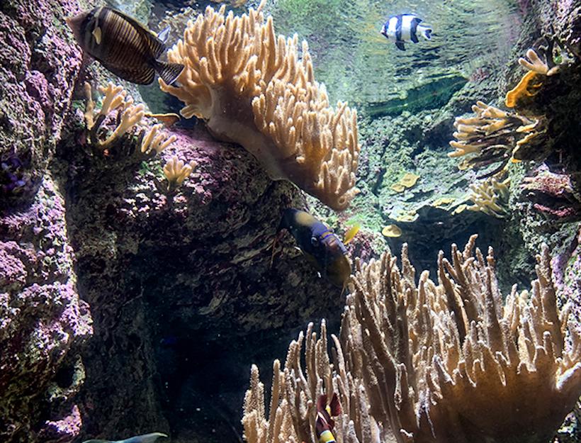 Paris Aquarium