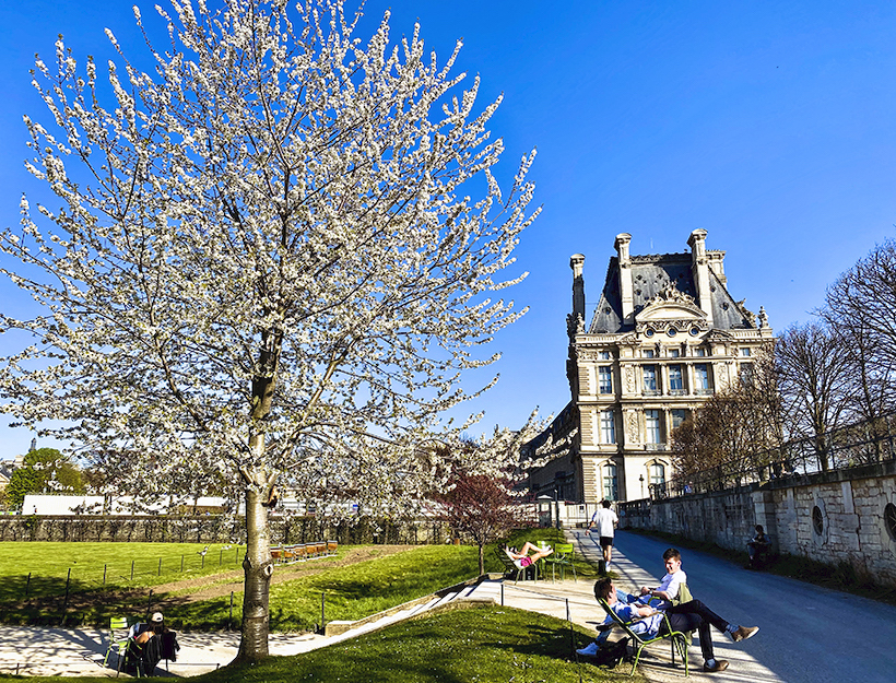 Landscape; one blooming tree,Louvre in the background, Jardin des Tuileries