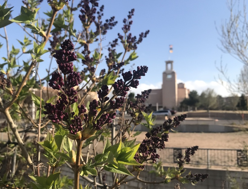 Spring in Santa Fe - Seek and Ye Shall Find - Disruption!